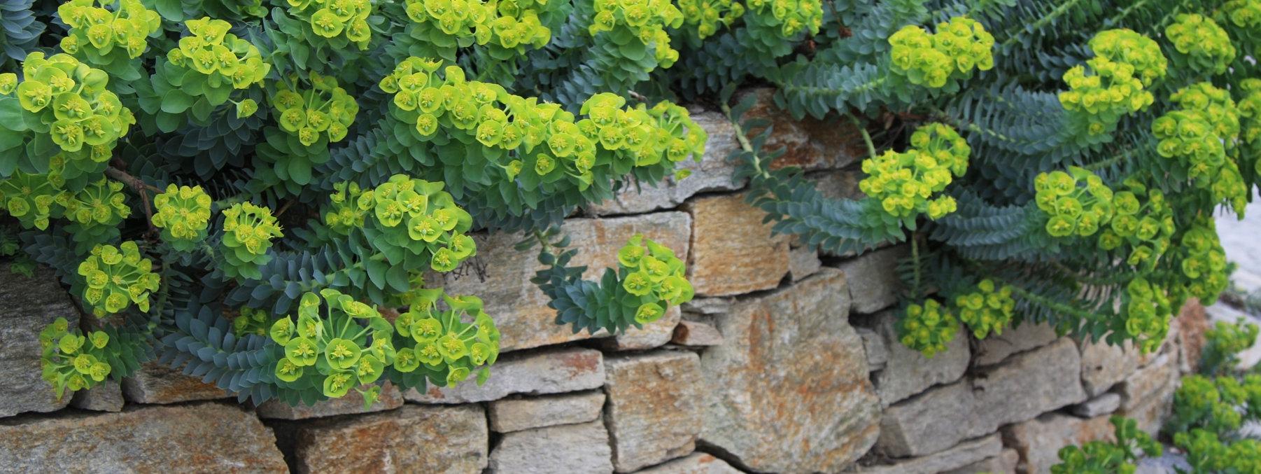 Návrhy a realizácie kvetinových a bylinkových záhonov